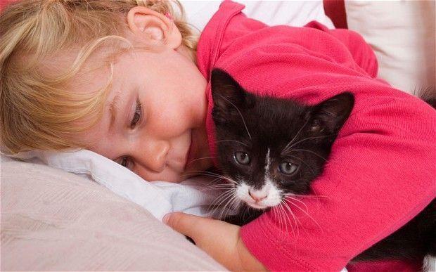 child-cat_2203918b.jpg