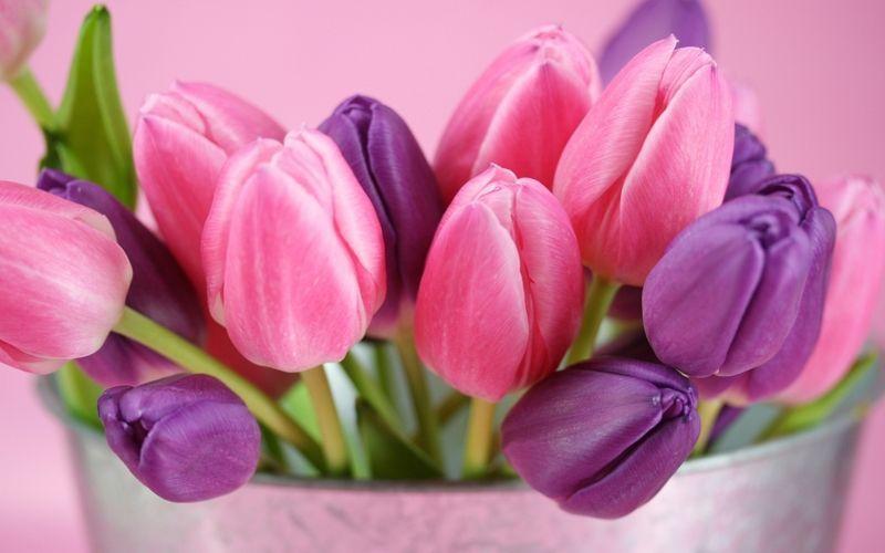 color_flower_04.jpg