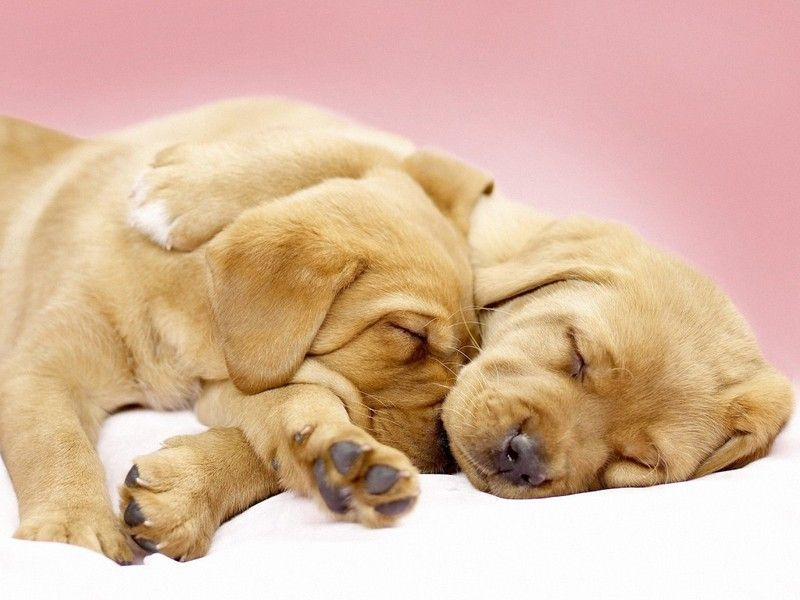 cute-puppies-and-dogs-sleeping-1024x768.jpg
