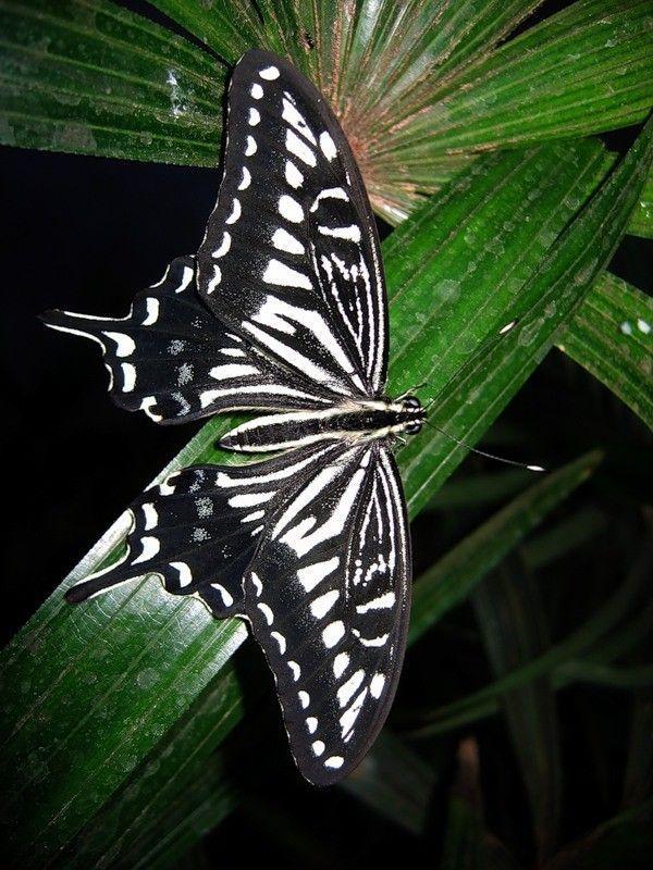 superbes papillons! - Page 2 Db16f81e