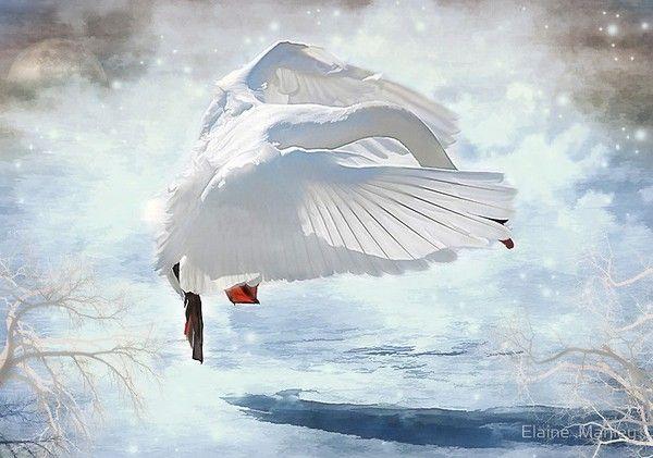 superbes illustr de  Elaine Manley