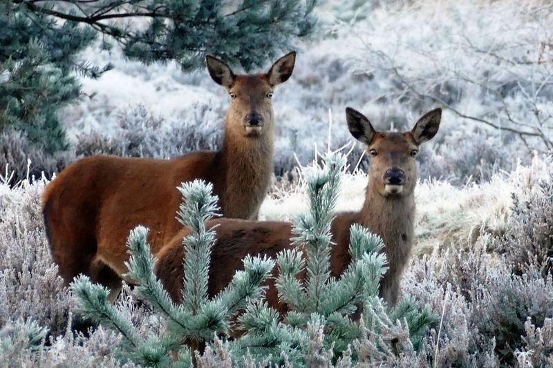 deer-1940369_1280.jpg