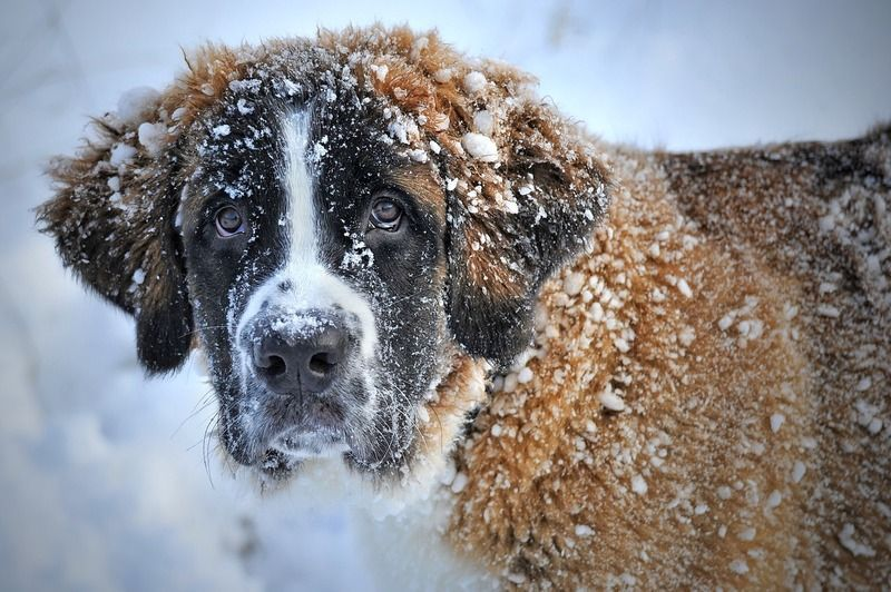 dog-in-the-snow-1168663_1280.jpg