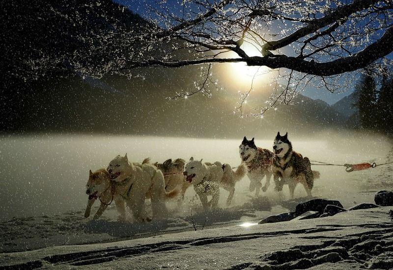 dogs-2921382_1280.jpg