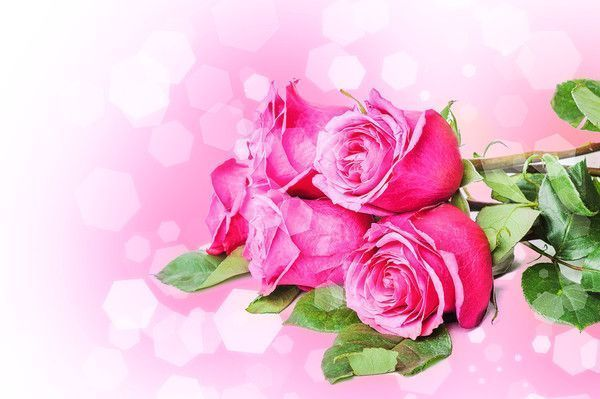 roses jolies roses....