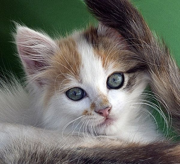 ANIMAUX : CHATS CATS
