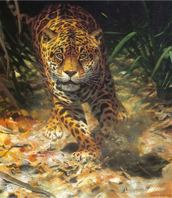 beau tigre