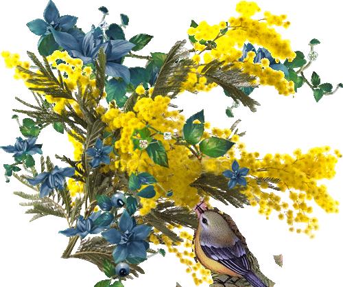 fleur-jaune-mimosa-101009.png