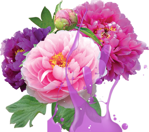 flores-de-tom-roxo.png