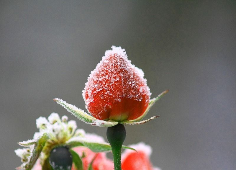 flower-1152673_1280.jpg