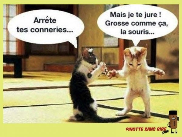 humour-chat-600x450.jpg