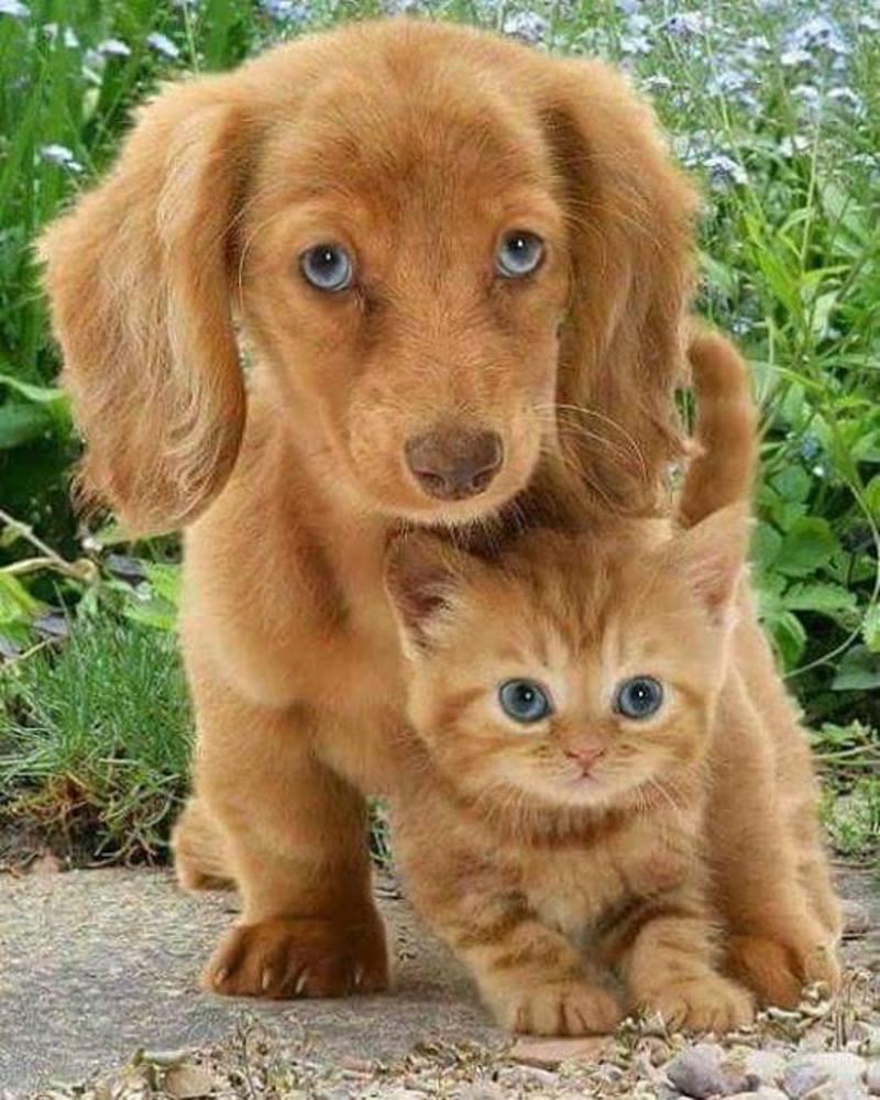 images de chien et chat  Ii_6