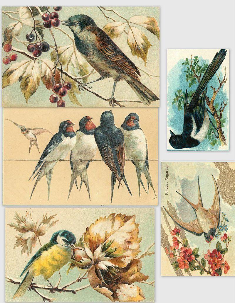 image-ancienne-oiseaux.jpg