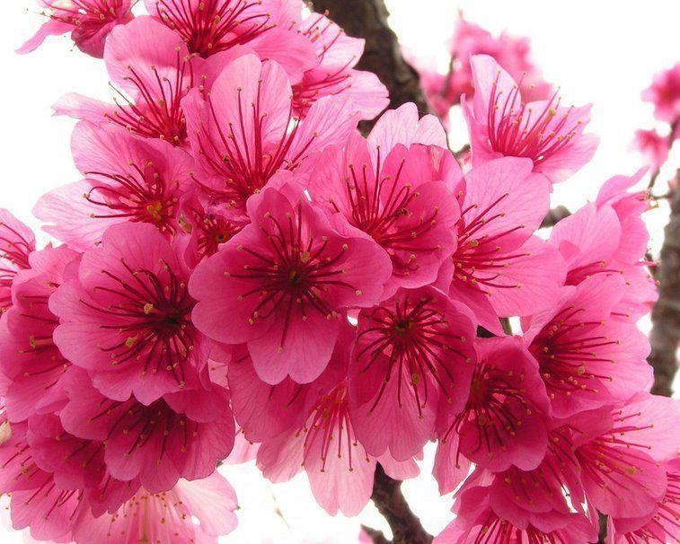 LE PRINTEMPS 520210__pink-spring_p