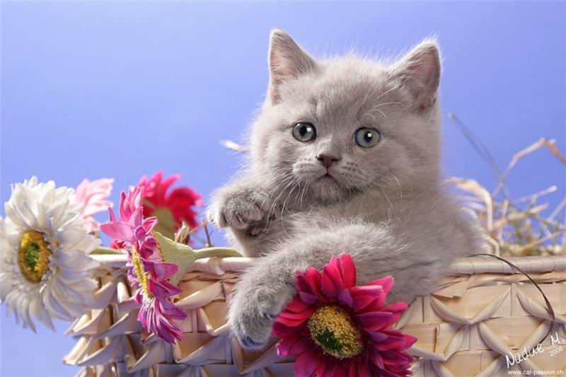 Кошка с цветами открытка с днем рождения 48