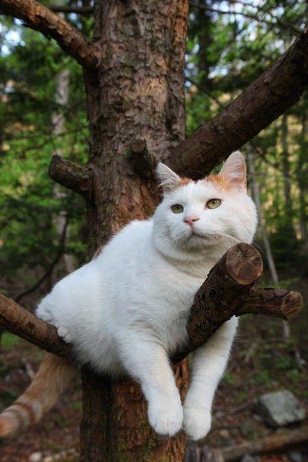Les chats - Page 6 Tumblr_mog3q576iG1qcxyrro1_500