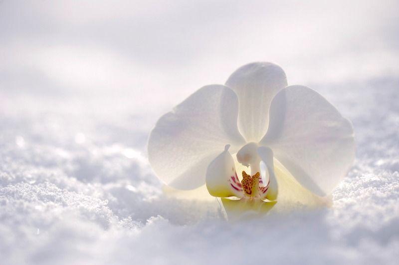 orchid-2952074_1280.jpg