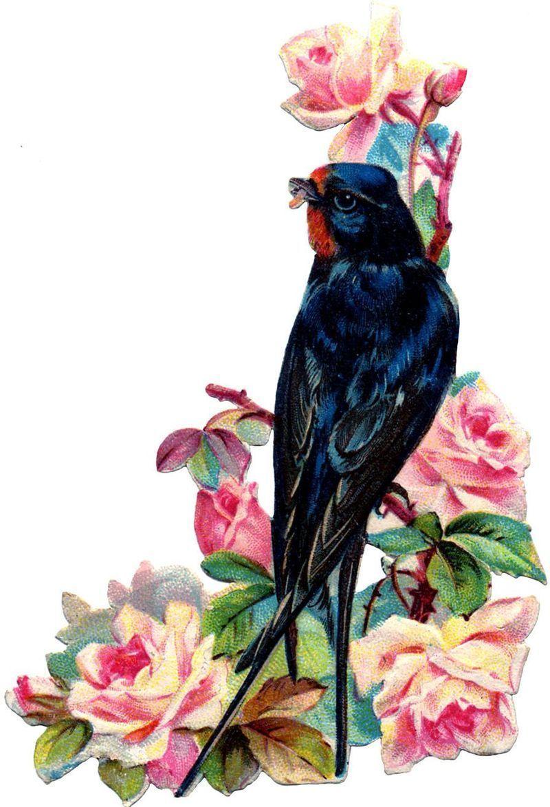pticy-retro_09.jpg