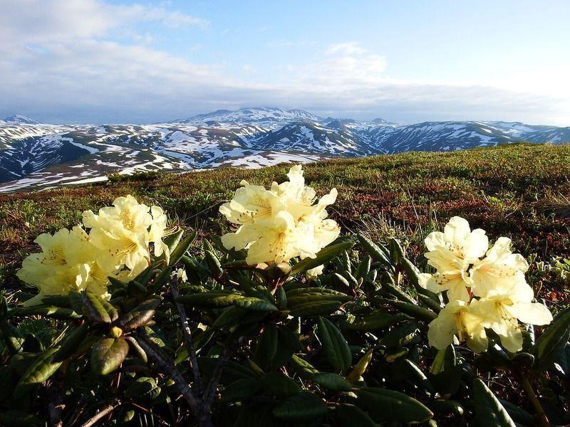 rhododendrons-2512708_960_720.jpg