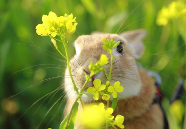 rodents-easter-bunny-flowers-animals-spring-garden-wallpapers-736x511.jpg