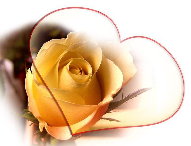 rose-66310_640_1