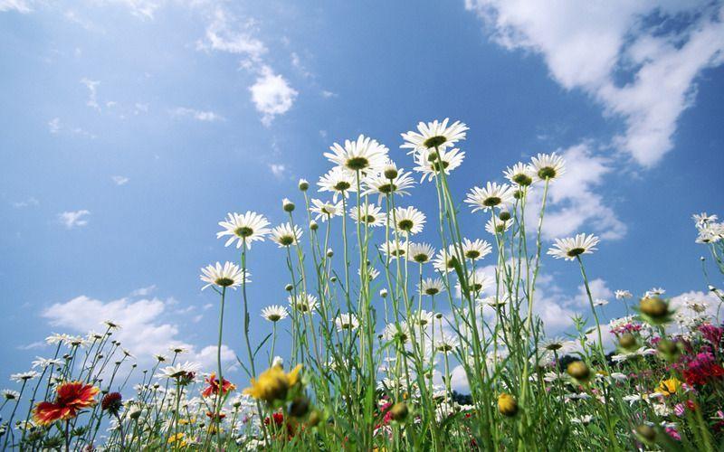 sky-glade-spring-5533.jpg