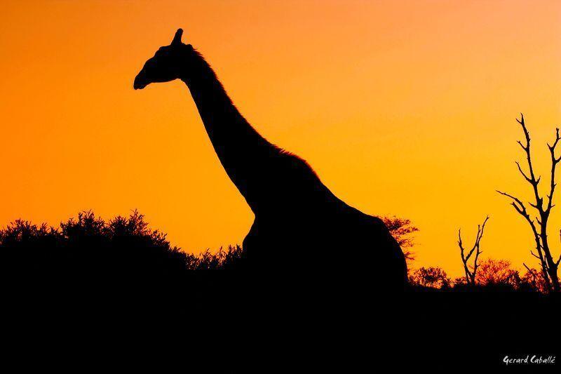 sudafrica02122copia.jpg