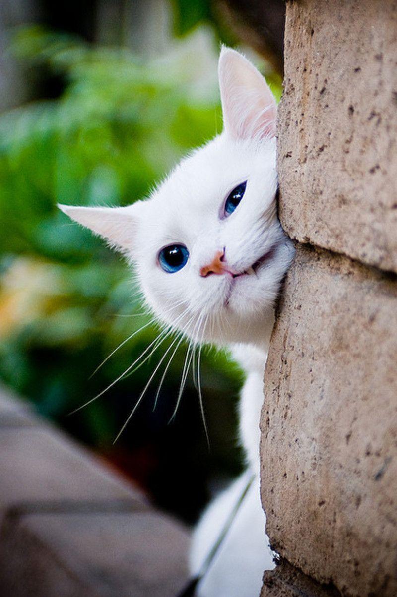 Les chats - Page 6 Tumblr_mo92vvMjuU1r2rj8po1_500
