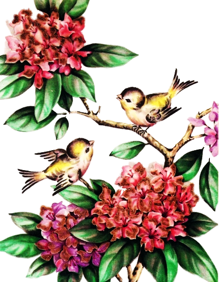 two-birds-on-branches.png