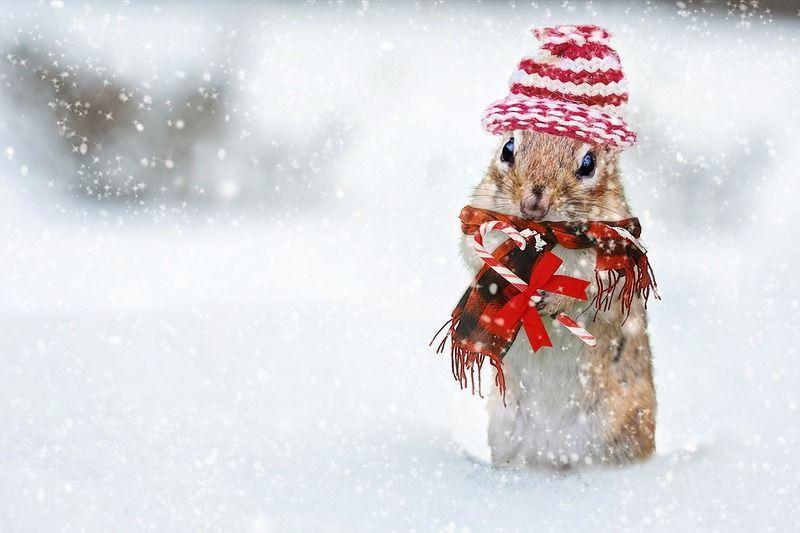 winter-2926825_1280.jpg