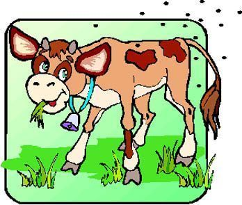 Gifs Animaux Vaches